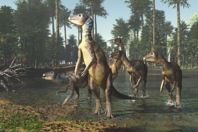 Weewarrasaurus pobeni