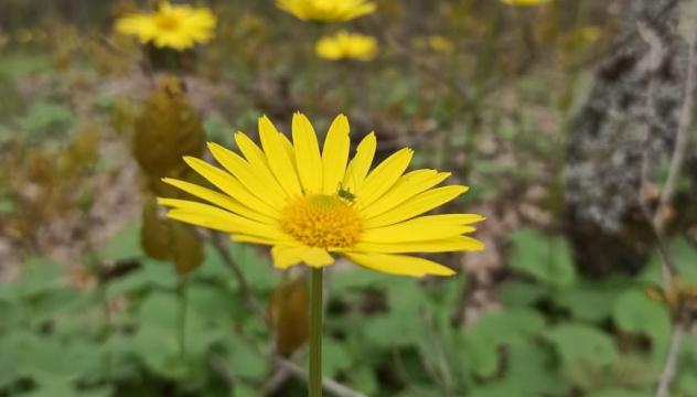 Растительность горы Собер Баш
