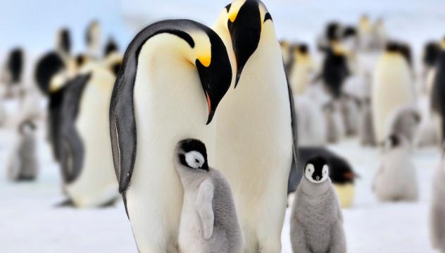 «Антарктида. Южное царство льда»