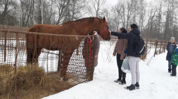 Молодежный клуб РГО на конном заводе в Подмосковье