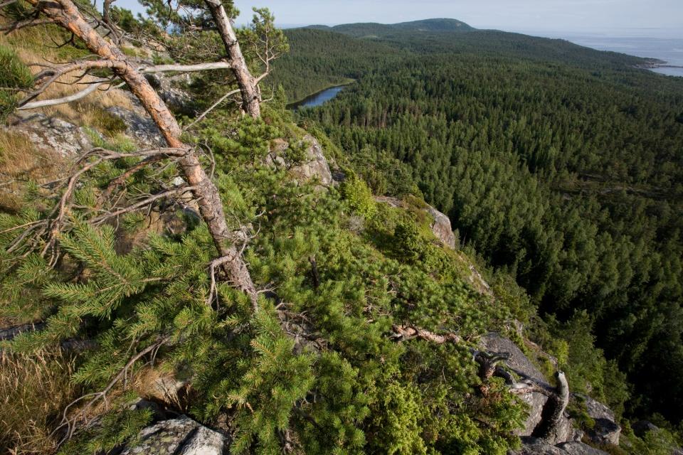 Вид на южную часть о.Гогланд с Соколиной горы